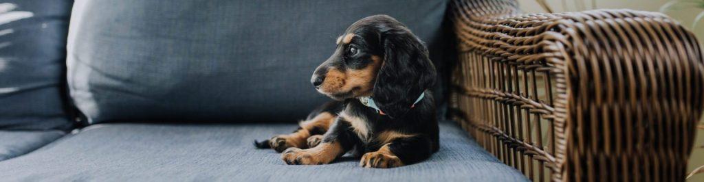 Puppy liggend op bank