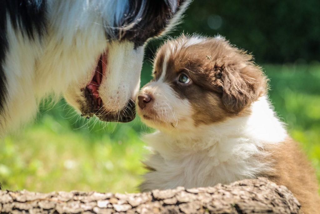 Mama hond met puppy