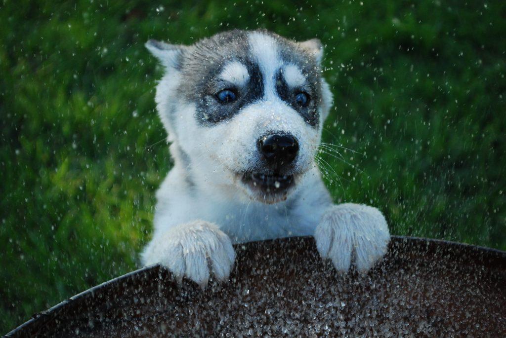 Puppy met water