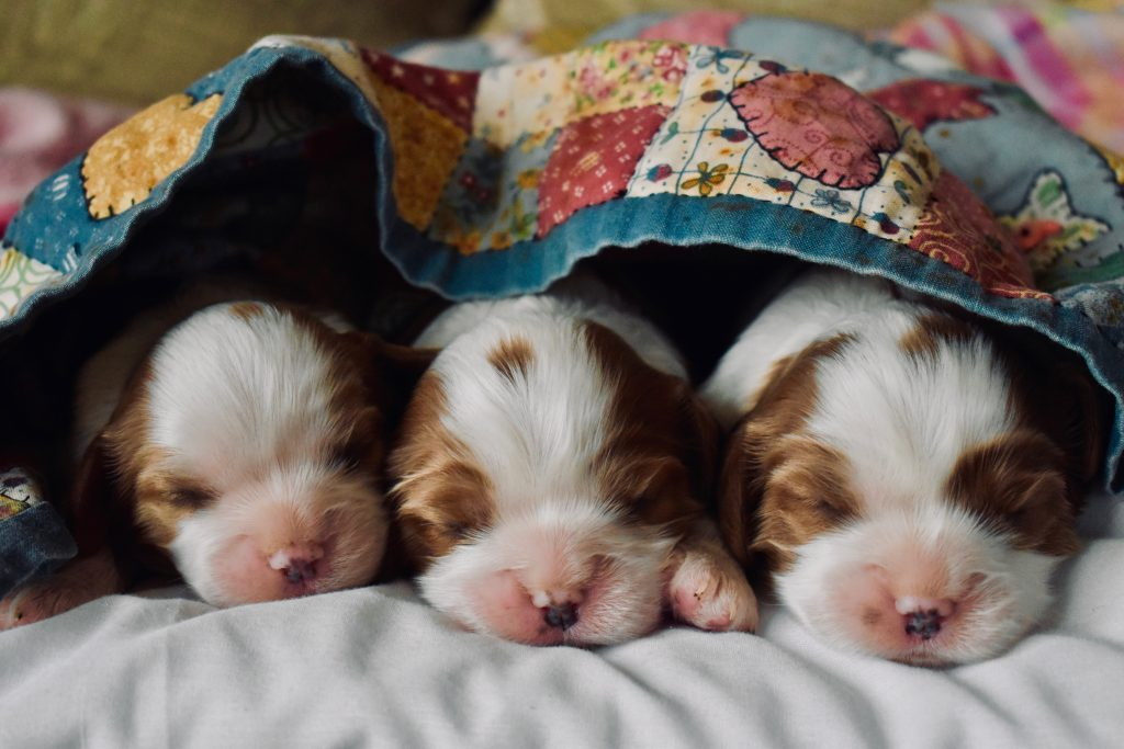 puppy's onder deken